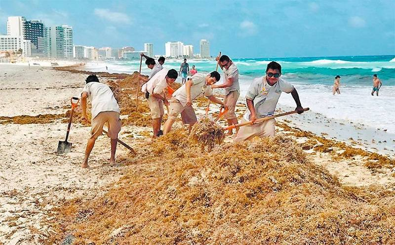 Mexico Still Struggling to Remove Seaweed from its Beaches