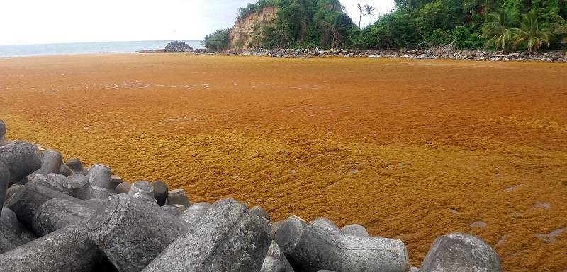 Global Tourism Resilience Center, MIT Join Hands on Sargassum Research