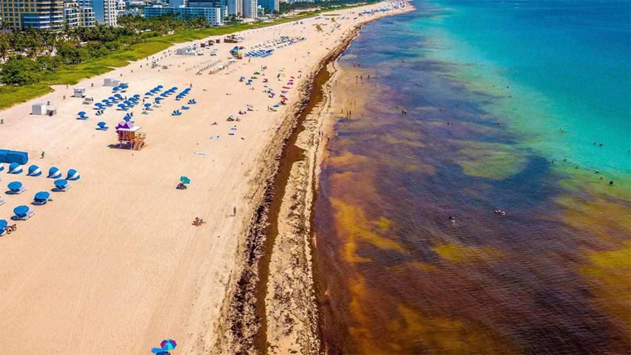 South Florida Beaches Forced to Tackle Seaweed Issue Head-On