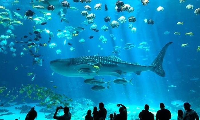 The Virtual Getaway Georgia Aquarium