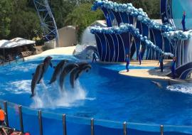 SeaWorld show with killer whales