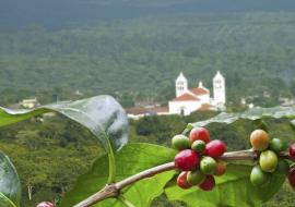 The Coffee Route in El Salvador